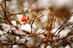snow-nature-bush-winter-medium